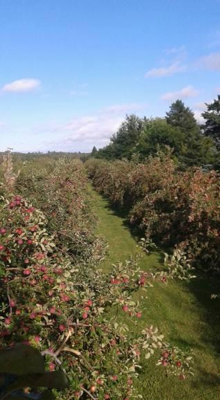 wintermoor orchard1
