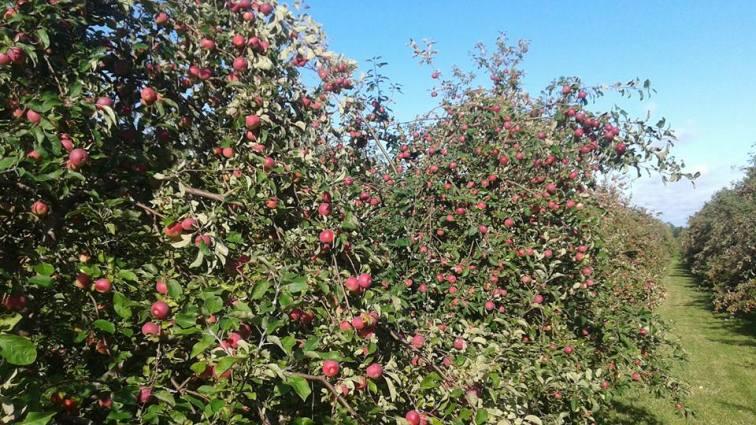 wintermoor orchard3